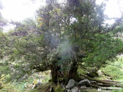 Tejos Rascafría-Valhondillo o Barondillo;sierra noroeste costa de vizcaya rutas grazalema viajes or